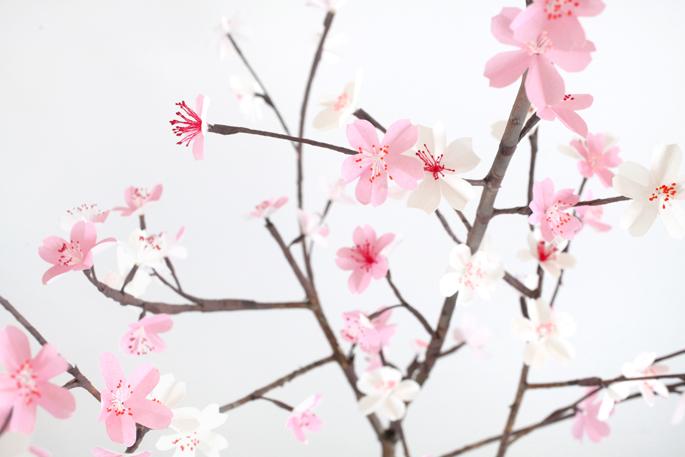 28_-_Branche_de_cerisier